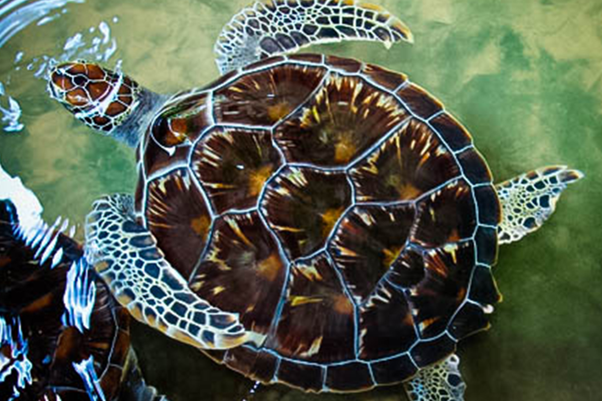 Galle Sea Turtle Farm and Hatchery near 32 Middle Street Galle Fort